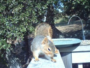 Bird Cam Squirrel