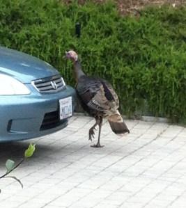 Turkey and Honda
